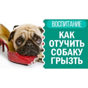 Почему собаки грызут тапки и другую обувь
