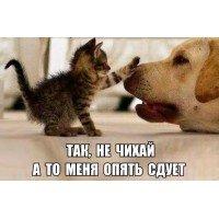 Смешные фото и видео про кота с тапком