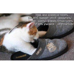 Кот гадит в тапки: что делать и как с этим бороться