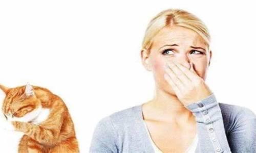 кот ссыт в тапки как вывести запах