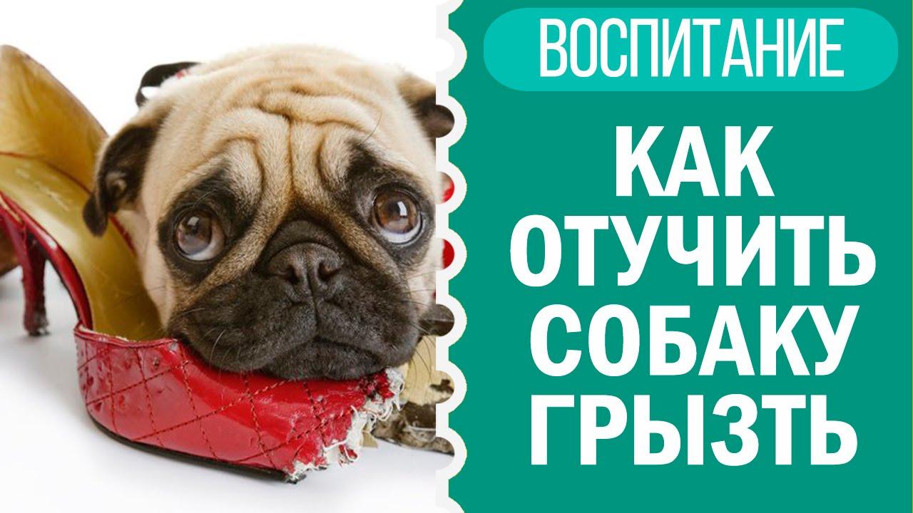 Как отучить собаку грызть тапки