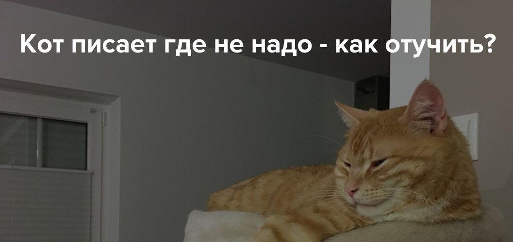 кот нассал в тапки что делать